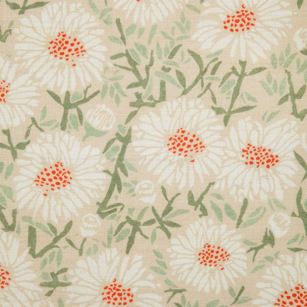 Daisies by Emily Burningham